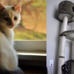 Projets Geeky Do-It-Yourself pour vos animaux de compagnie