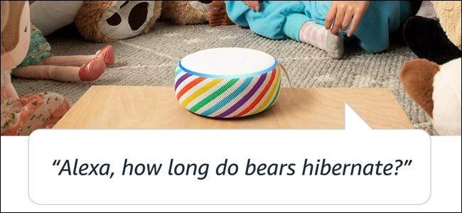 """Une édition Echo Kid dans une chambre d'enfant, avec la question """"Combien de temps les ours hibernent-ils?"""""""