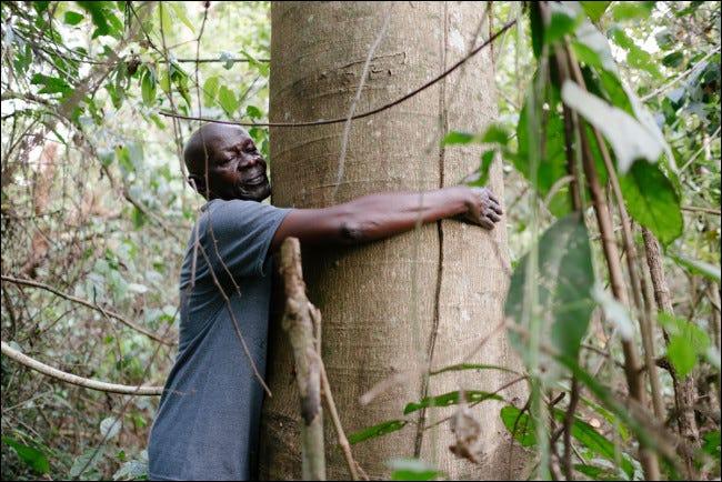 La mission d'Ecosia est de planter des arbres